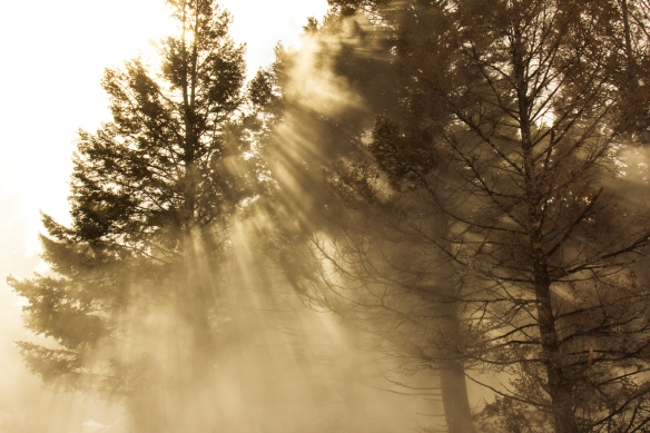 Sunbeams and Pines