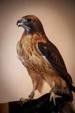 Raptors 20140112---019