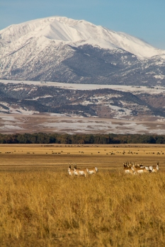Crazy Mountains_20121007_016
