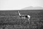 Central Montana 20130526-059
